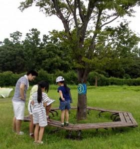 木の名前あて3[加工]