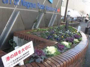 ガーデン植替 017