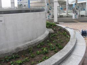 ガーデン替 016