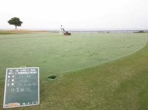 green karikomi-2